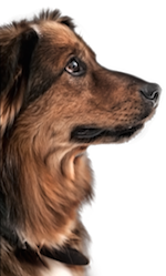 mysteries with dogs mystery series with dogs Caught Dead in Wyoming series by USA Today bestselling author Patricia McLinn