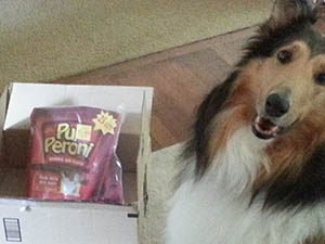 Kalli the collie, the star of Patricia McLinn's Readers List newsletter