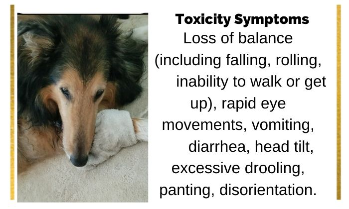 Metronidazole neurotoxicity in dogs
